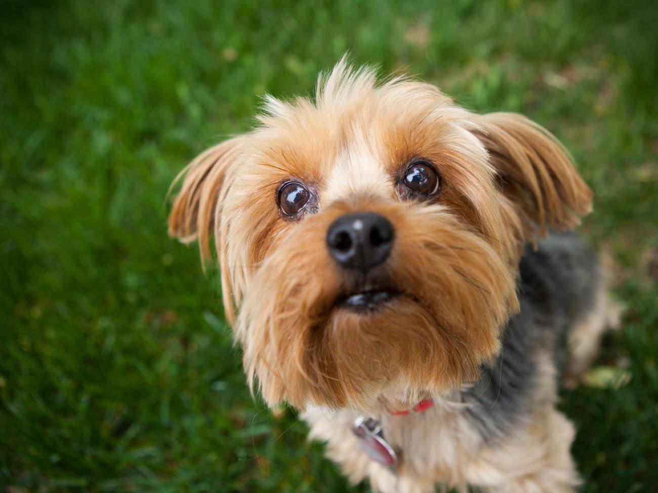 About Pet - Pet Tags Just Make Sense