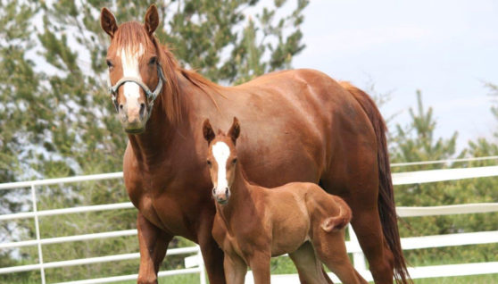Advice For Looking After Your Horse's Hooves