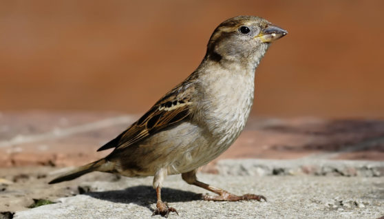 Africa Birds Migration