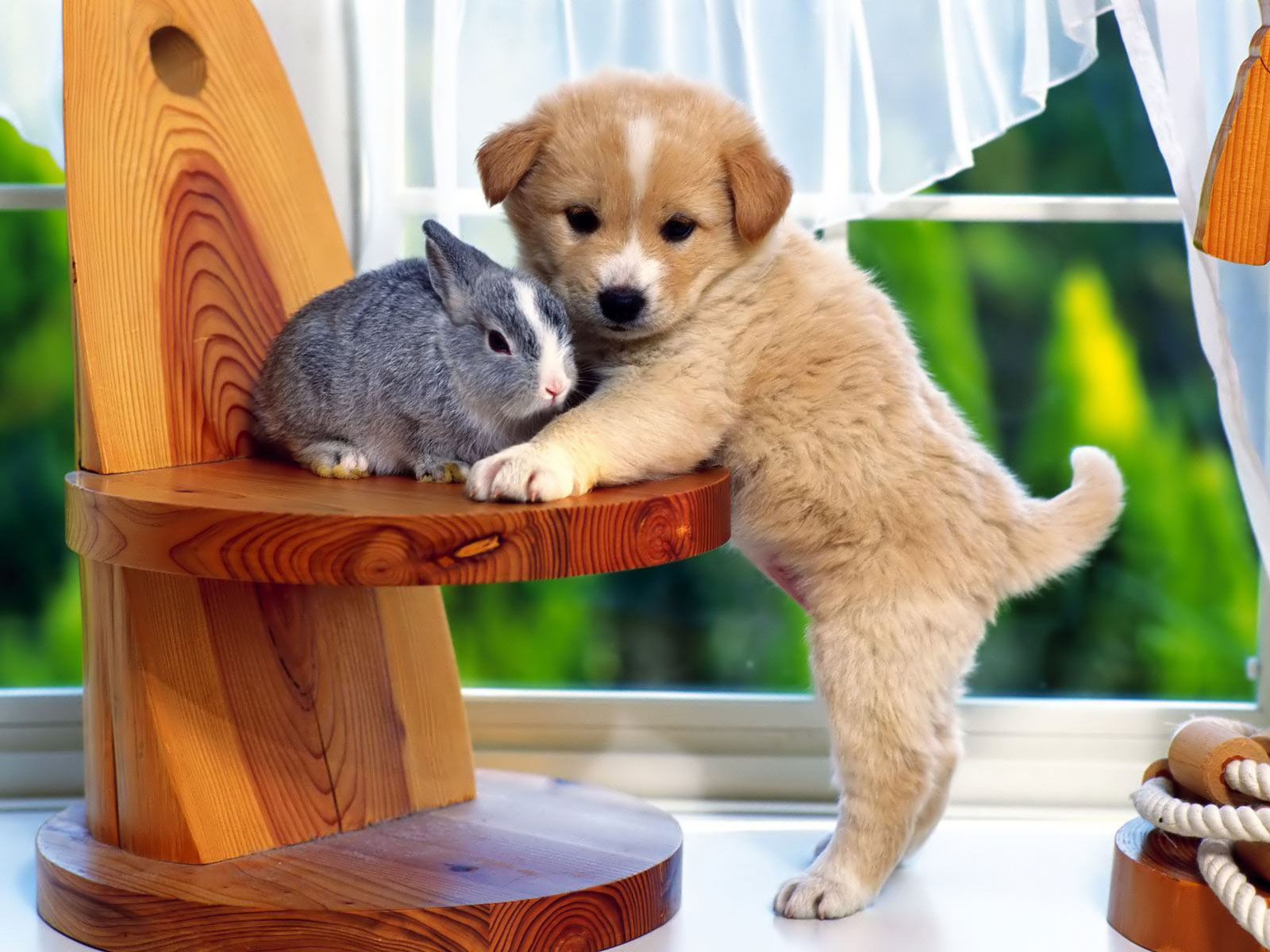 An All New World For Pets Online