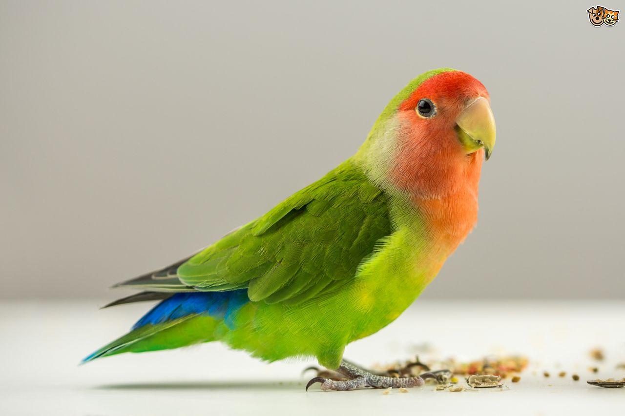 Birds Looking For Bird Houses