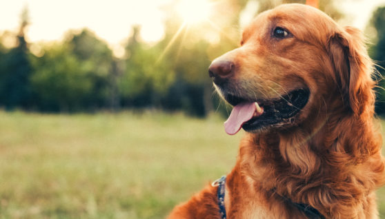 Canine Muzzle - Soft Muzzle is The Best Option For Your Pet!