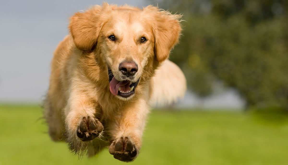 Clean Teeth Are an Essential Part of Overall Health For Your Dog