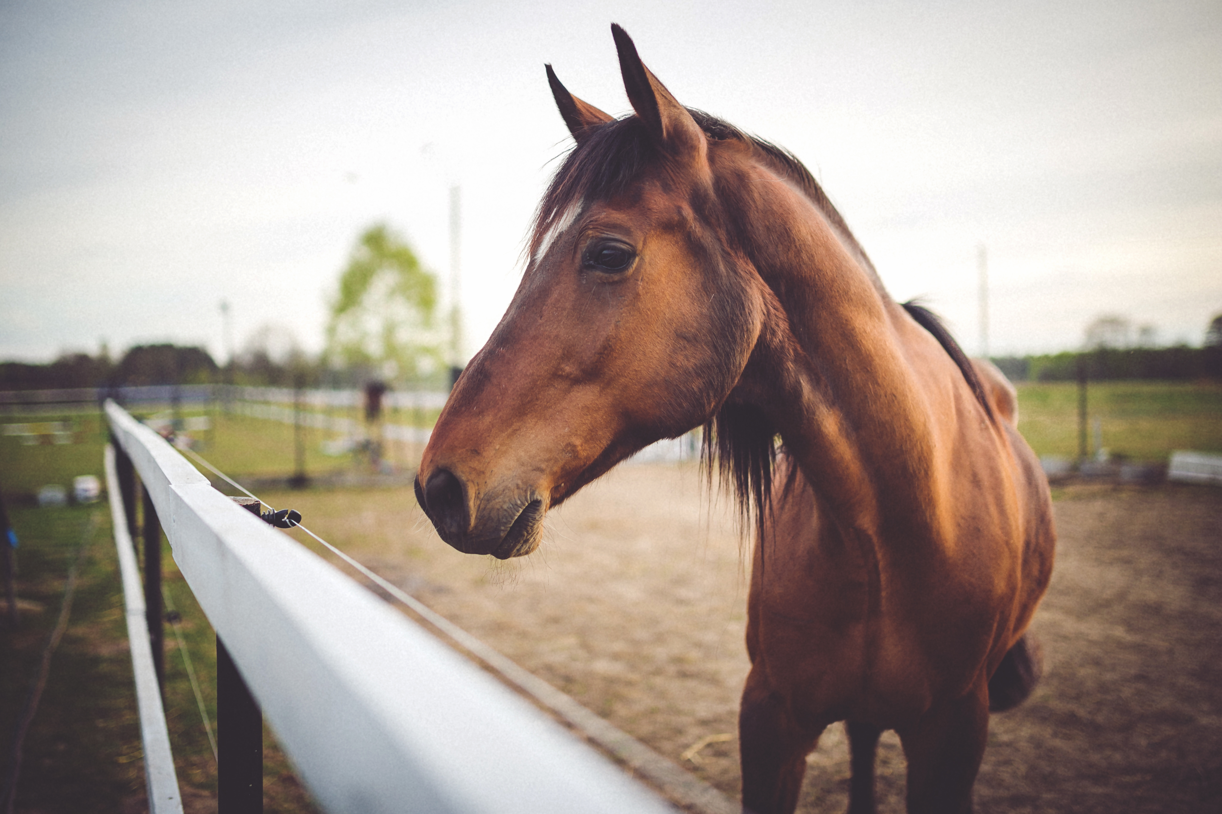 Establish True Connection With Your Horse