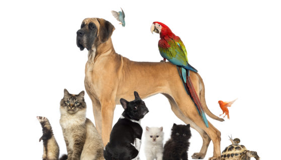 General Information on Pet Health Insurance