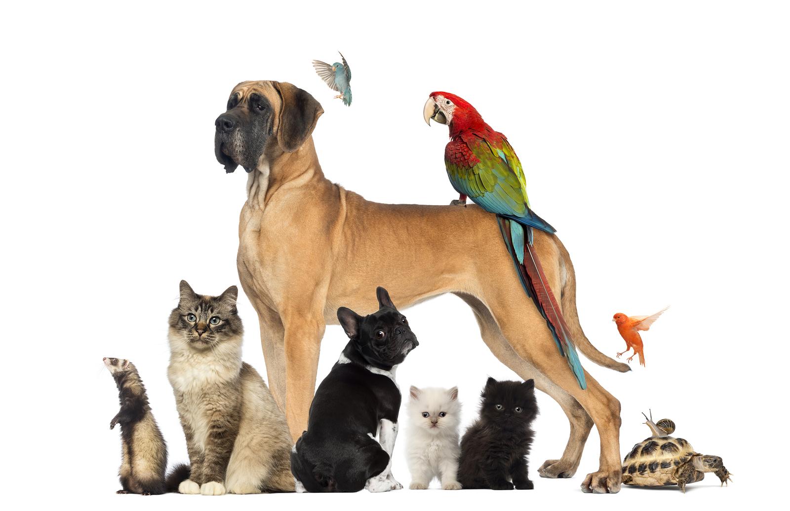 General Information on Pet Health Insurance
