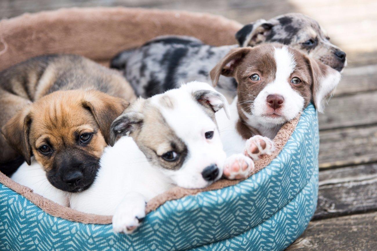 Get The Best Eco-friendly Pet Toys