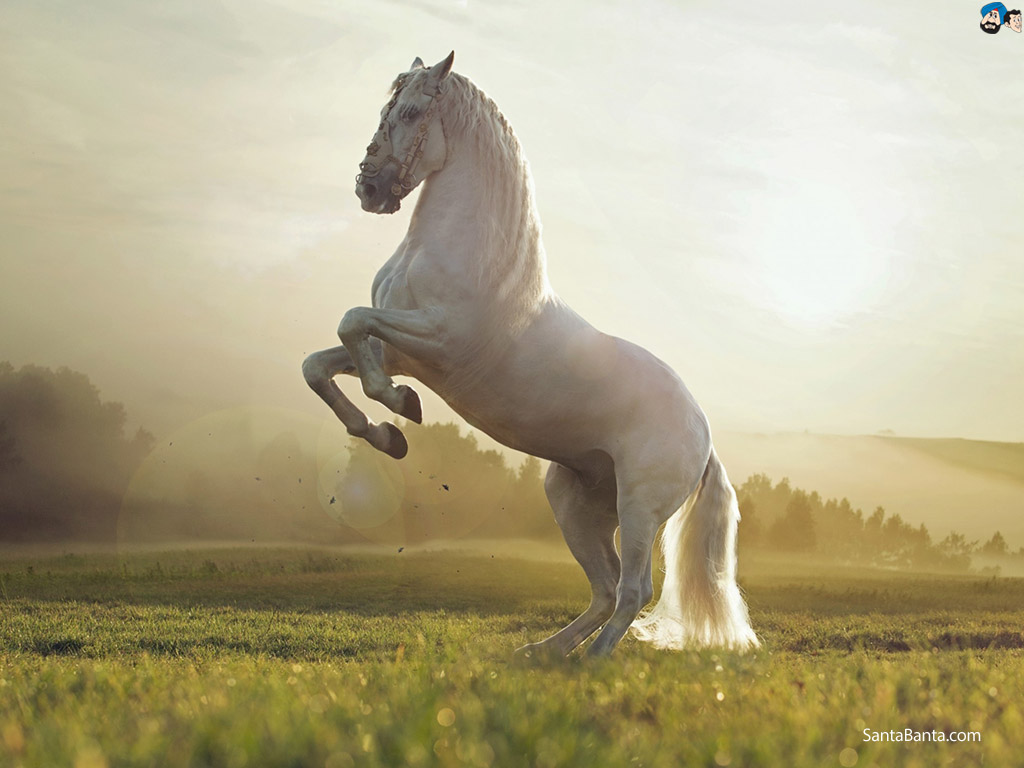Information Regarding The Poisoning of Horses