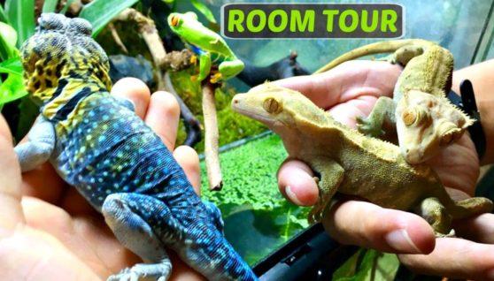 Nourishment For Your Reptiles