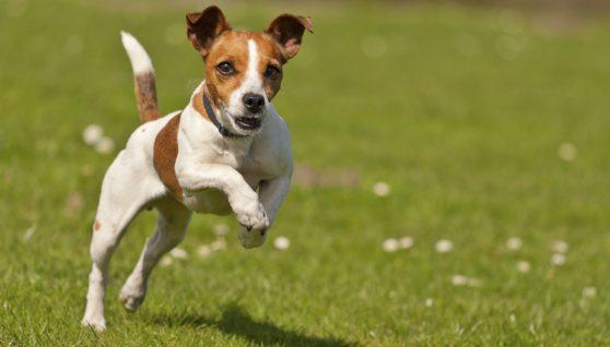 Obedient Dog Training
