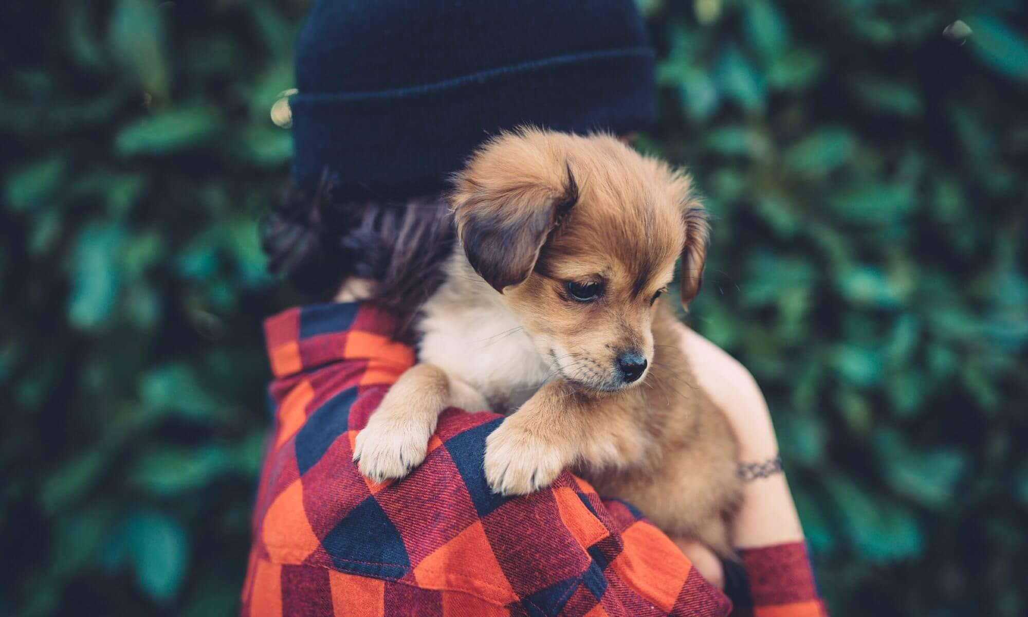 Pet Accessories- The Best Way to Beautify Your Pets