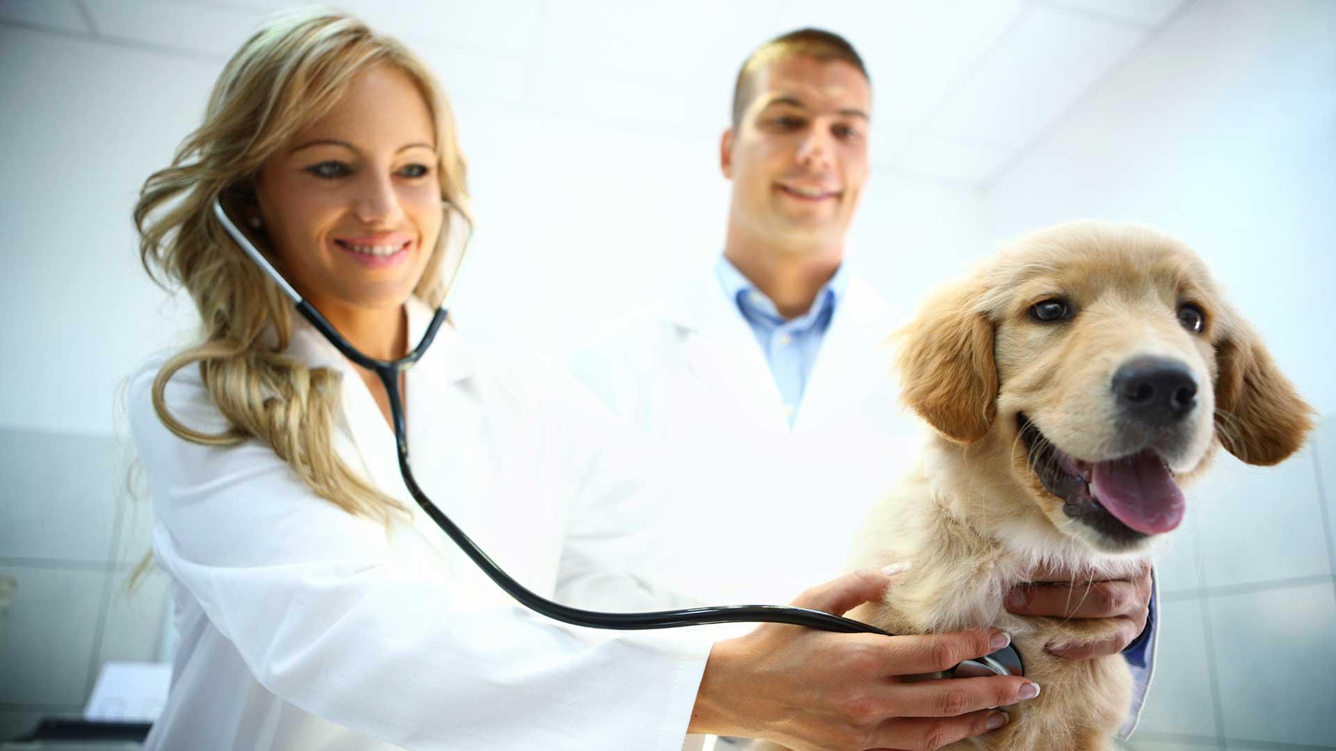 Program Flavor Tabs - Best Flea Treatment for Dogs