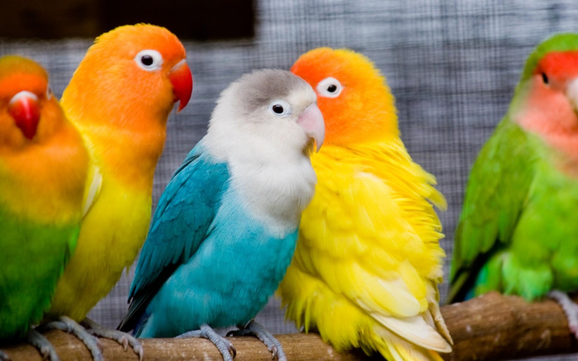 Raising Mallard Ducks 5 Crucial Tips For Beginners