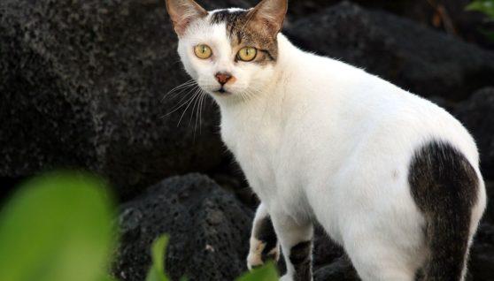 Russian Cat Breeds