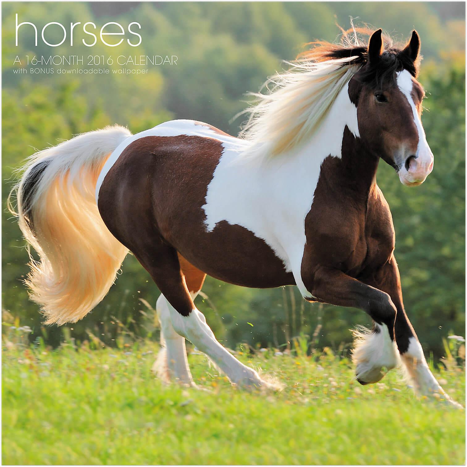 The Secrets Behinds Happy Horses