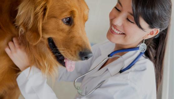 Ways to Combat Dog Fleas Naturally