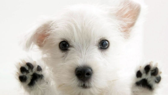 What You Must Know About Finding the Best Dog Breeder